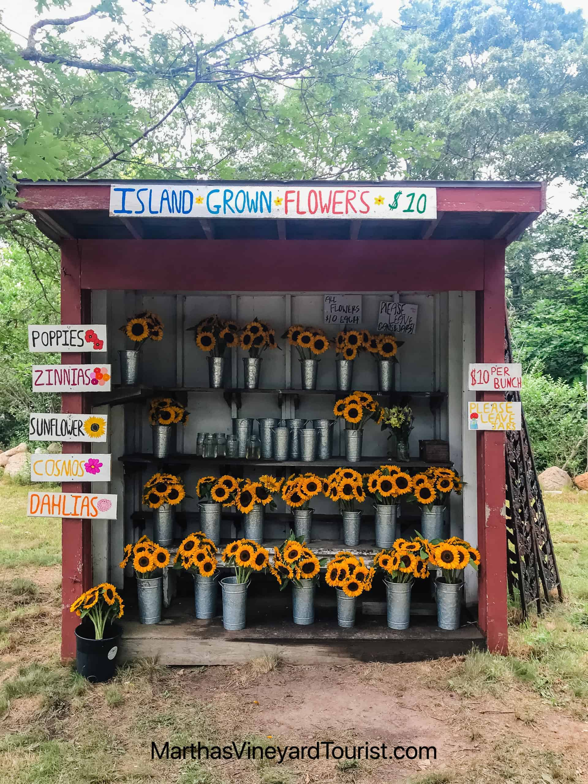 a sunflower stand offering bunches of sunflowers for $10 in Martha's Vineyard