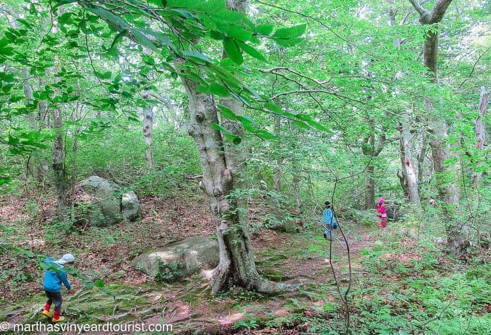 kids hiking in the forest
