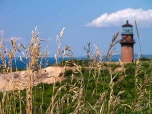 Aquinnah lighthouse in the distance beyond tall grass