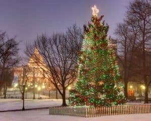 The Christmas tree in Boston Common