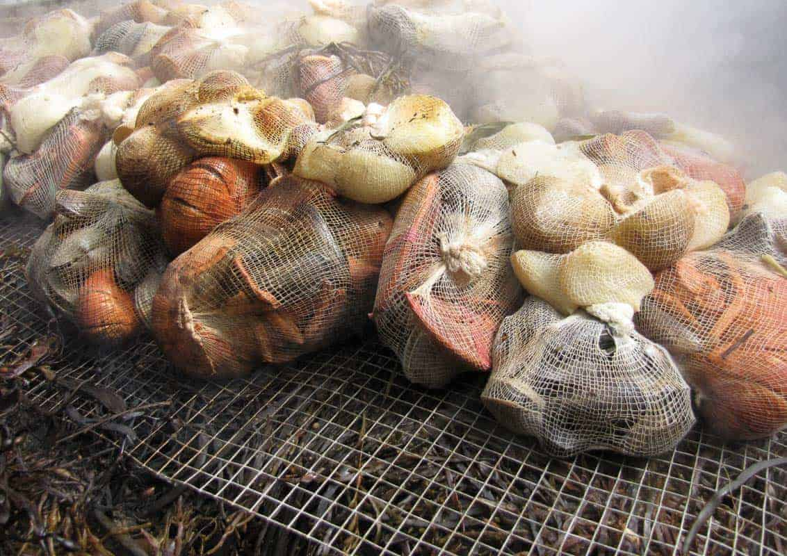 steaming shellfish in a clambake