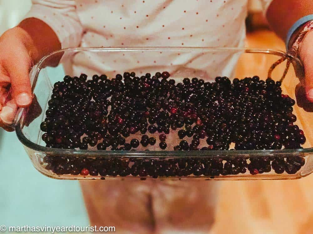 wild blueberries and huckleberries in a pyrex dish