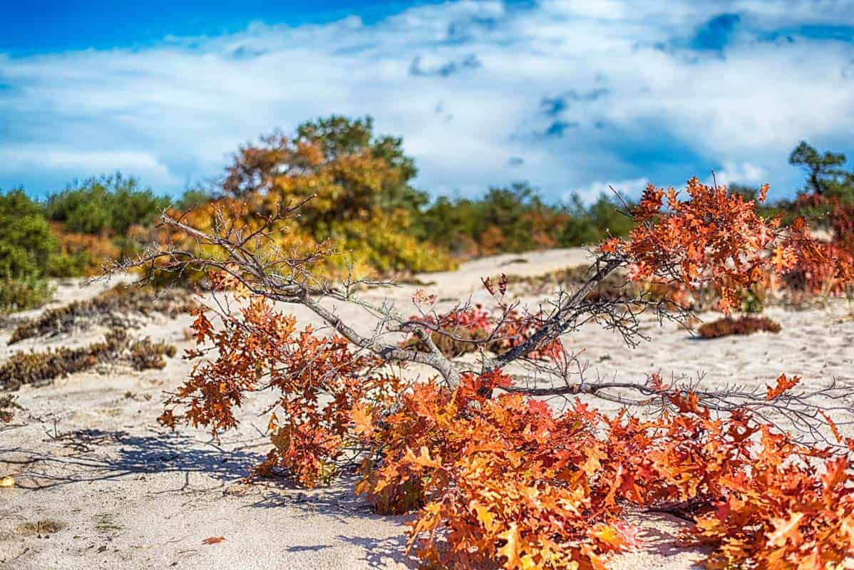 Beach at Cape Cod National Seashore with the fall colors of a maple branch
