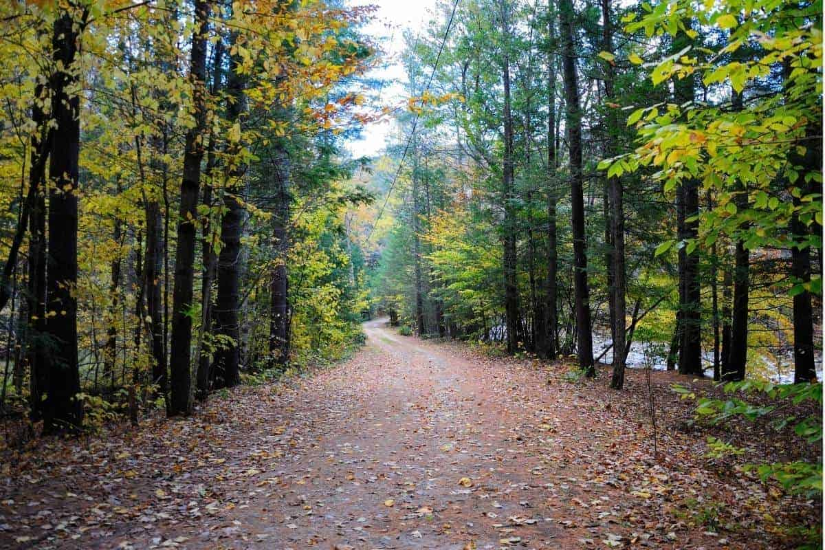 Mohawk Trail state forest in Massachusetts