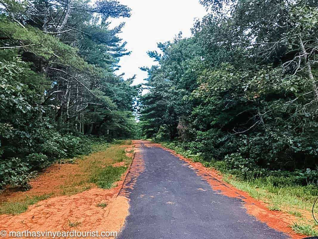 a path in Manuel Correllus State Forest in Martha's Vineyard Massachusetts