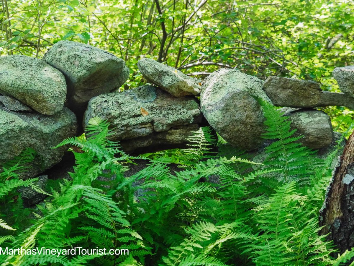 giant rocks, ferns and trees on a nature preserve in Martha's Vineyard